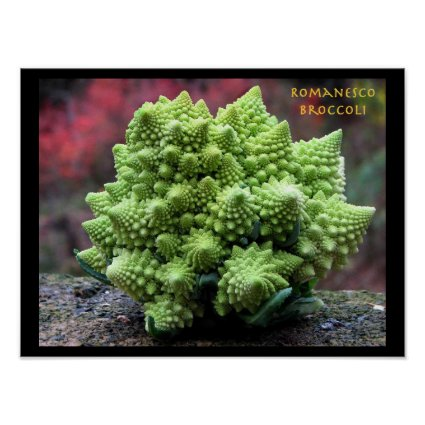 Romanesco Broccoli Vegetable Poster