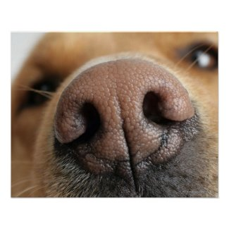 stuff and things we can learn from dogs - the wisdom of dogs