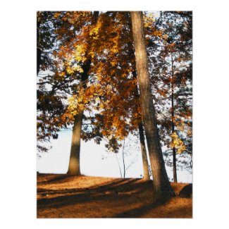 Fall maple tree leaves, nature photography, poster