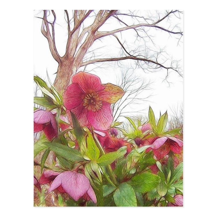 Garden Scene - Hellebores And Old Oak Postcard