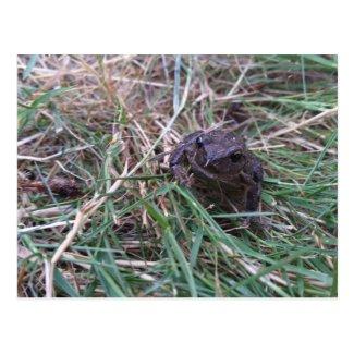 Little frog postcard