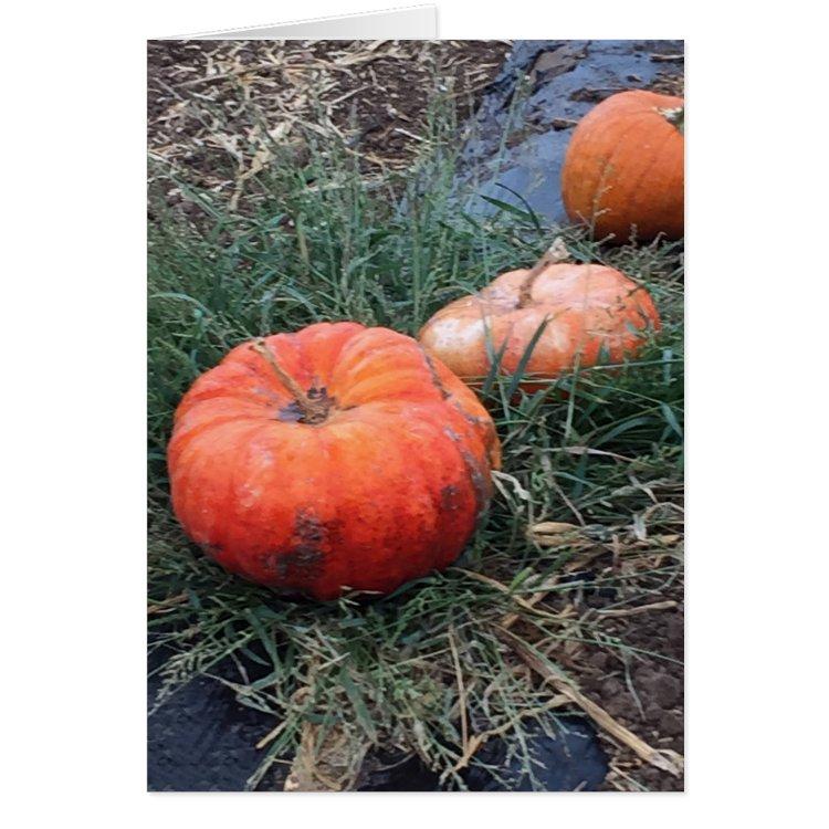Pumpkins in a Row Card