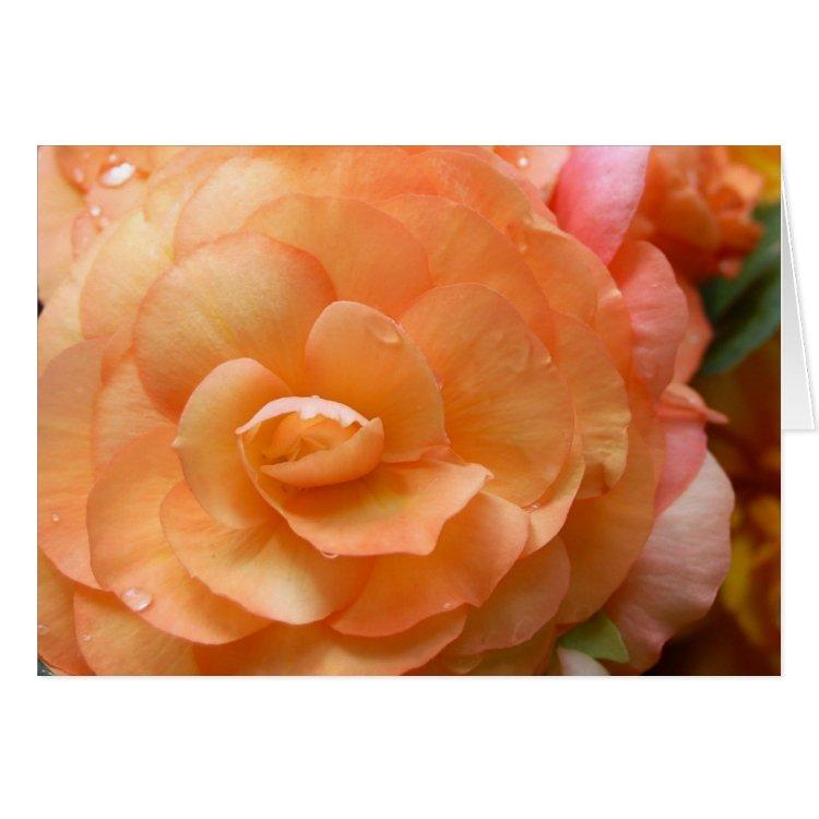 Peach Begonia Card