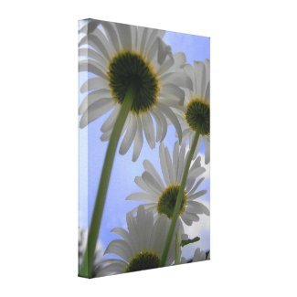 Daisy Day Wrapped Canvas