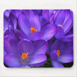 Purple crocus mousepad