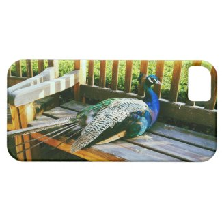 Peacock on the bench iPhone SE/5/5s case