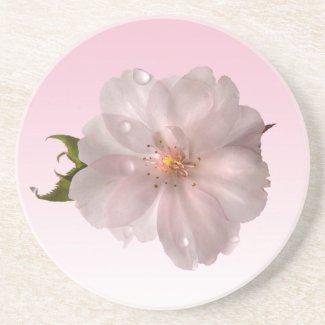 Cherry Blossom Sakura Drink Coaster