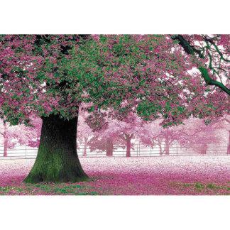 Custom Window Film Glass DIY Pink Flower Tree F37