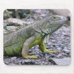 Svelte Green Iguana Mouse Mats