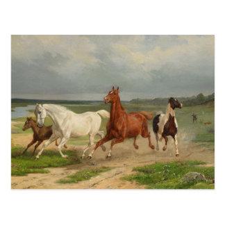 Svenska: Flyende hästar Postcard