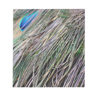 Swag Peafowl Feathers Cool Colors Notepad
