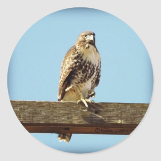 Swainson's Hawk Classic Round Sticker