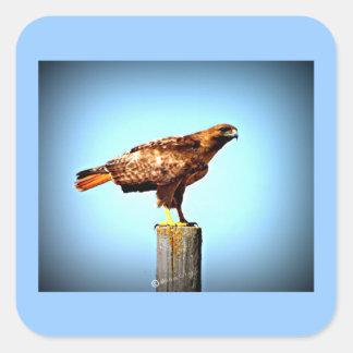 Swainson's Hawk Square Sticker
