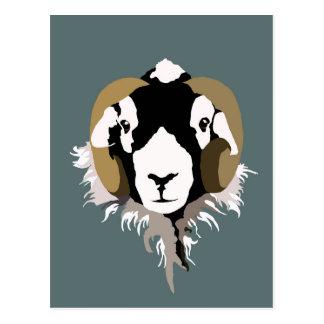 Swaledale Sheep Postcard
