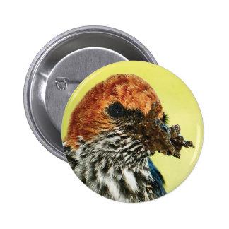 Swallow avian buttons & badges