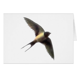 Swallow Clear Cards