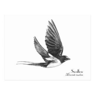 Swallow in flight post card