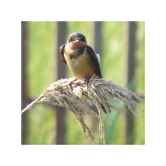 Swallow on a cattail gallery wrap canvas