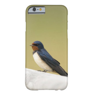 Swallow on a Wooden Ledge Barely There iPhone 6 Case