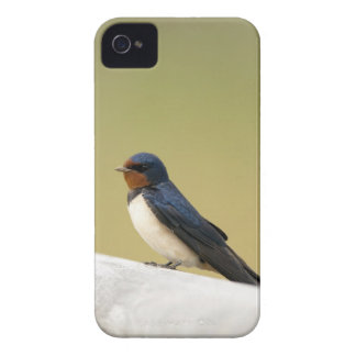 Swallow on a Wooden Ledge iPhone 4 Case-Mate Case