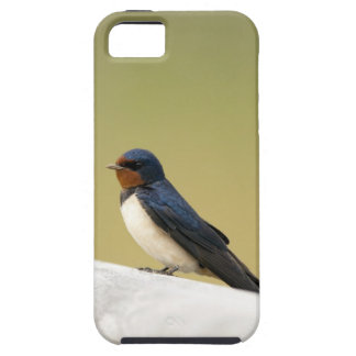 Swallow on a Wooden Ledge iPhone SE/5/5s Case