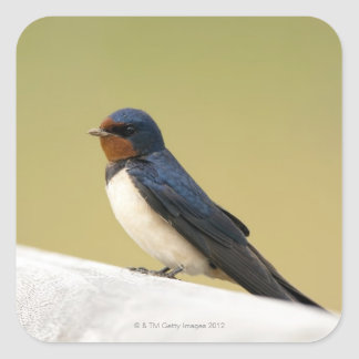 Swallow on a Wooden Ledge Square Sticker