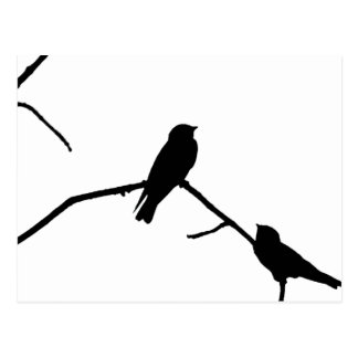 Swallow or Swifts Silhouette Love Bird Watching Postcard