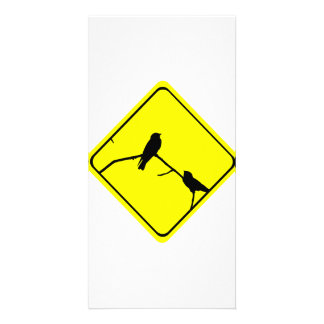 Swallow or Swifts Warning Sign Love Bird Watching Card