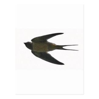 Swallow Postcard