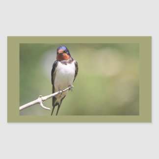 Swallow Rectangular Sticker