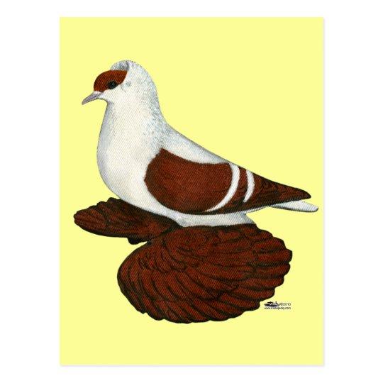 Swallow:  Red Fullhead Postcard