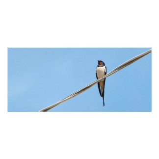 Swallow sitting on wire rack card