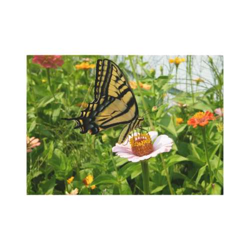 Swallow Tail butterfly on Pink Zinnia Flower Canvas Print