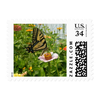 Swallow Tail Butterfly on Pink Zinnia Stamps