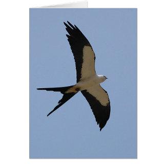 Swallow Tail Kite Card