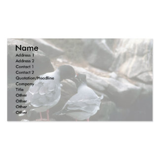 Swallow-Tailed Gulls, Courtship Business Cards