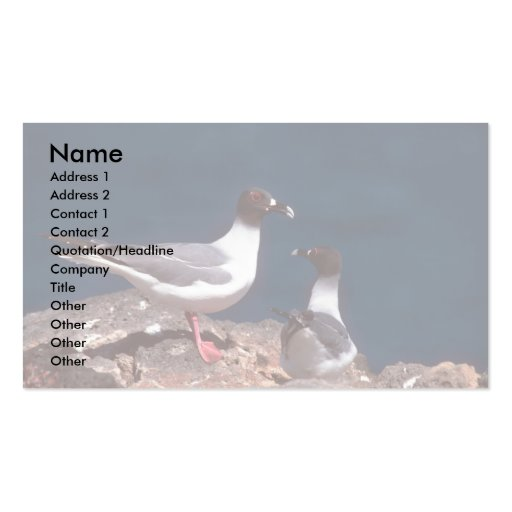 Swallow-Tailed Gulls On Rocks Double-Sided Standard Business Cards (Pack Of 100)