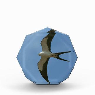 Swallow-tailed Kite Acrylic Award