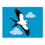 Swallow-tailed Kite in flight Post Cards