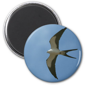 Swallow-tailed Kite Magnet