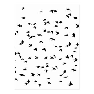 Swallows in Flight Bird Print Postcard