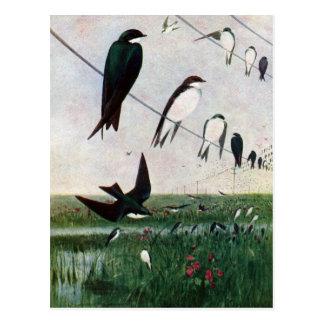 Swallows on a Power Line Postcard