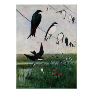 Swallows on a Power Line Print