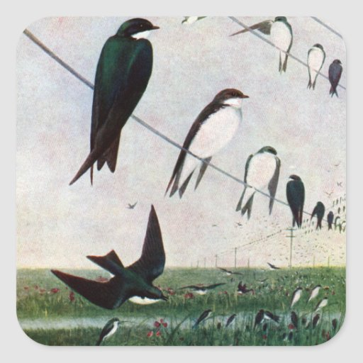 Swallows on a Power Line Square Sticker
