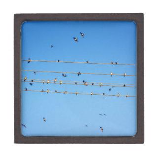 Swallows on wire keepsake box