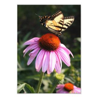 Swallowtail amarillo en Coneflower Cojinete