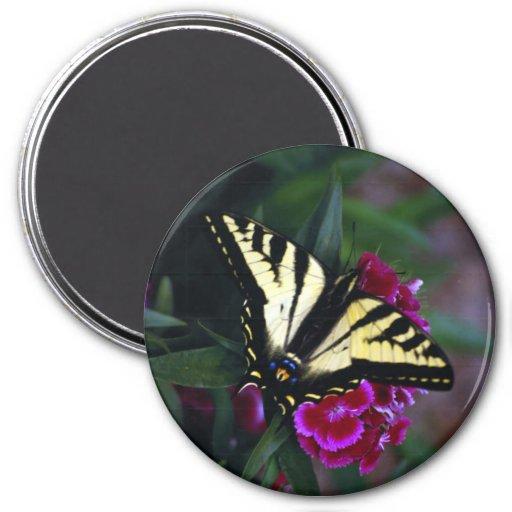 Swallowtail amarillo occidental (2) imán redondo 7 cm