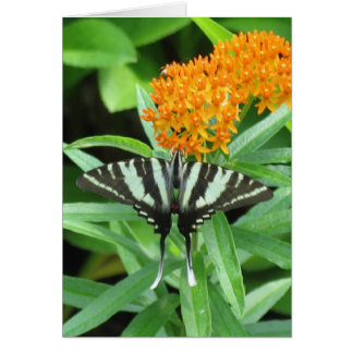 Swallowtail and Milkweed Card