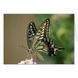 Swallowtail asiático felicitación
