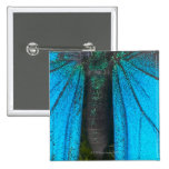 Swallowtail azul de la montaña (Papilio Ulises) Pin